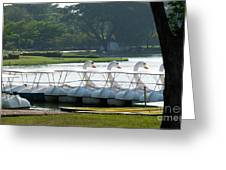 Swan Boat In A Lake Greeting Card