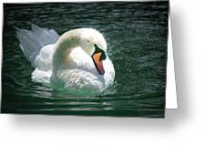 Swan Bow Greeting Card