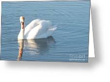 Swan Cape May Greeting Card