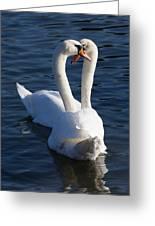 Swan Courtship  Greeting Card