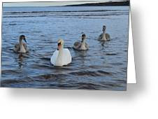 Swan Family At Sea Greeting Card