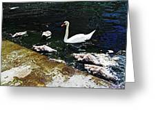 Swan Feather Greeting Card
