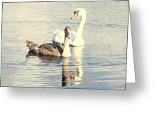 Swan G Greeting Card