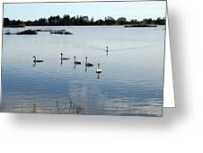 Swan Hangout Greeting Card