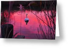 Swan In A Sunset Greeting Card