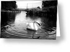 Swan In Black And White Greeting Card