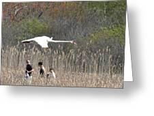 Swan In Flight Greeting Card