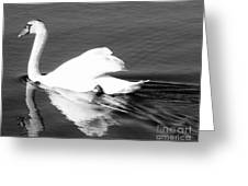 Swan In Motion On A Pond Greeting Card