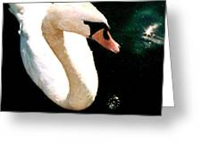 Swan In Pond Greeting Card