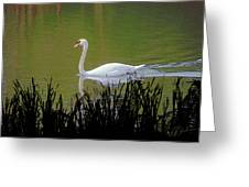 Swan In The Pond Greeting Card