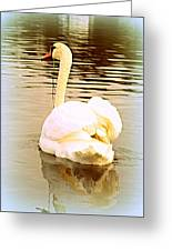swan in the genus Cygnus Greeting Card