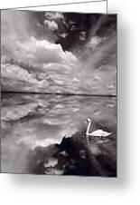 Swan Lake Explorations B W Greeting Card