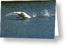 Swan Landing 2 Greeting Card