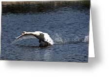 Swan Landing 3 Greeting Card