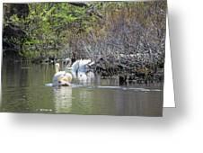Swan Life Greeting Card