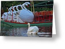 Swan Meeting Up With Some Friends Greeting Card