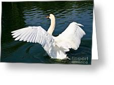 Swan Moment Greeting Card