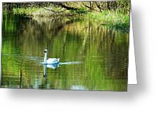 Swan On The Cong River Cong Ireland Greeting Card