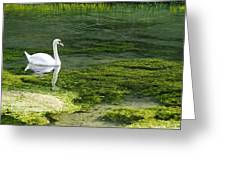 Swan On The River Lathkill Greeting Card
