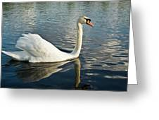 Swan On The Run Greeting Card