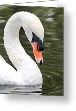 Swan Profile Greeting Card