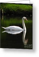 Swan Reflected Greeting Card
