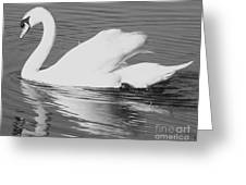 Swan Reflection Greeting Card