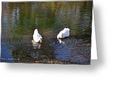 Swan Ripplle  Greeting Card