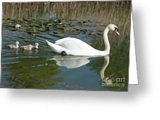 Swan Scenic Greeting Card
