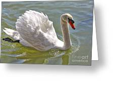 Swan Swimming By Greeting Card