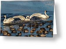 Swan Wings Reach Greeting Card