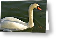 Swan Up Close Greeting Card