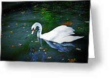 Swan With Twig Greeting Card