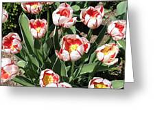 Swanhurst Tulips Greeting Card