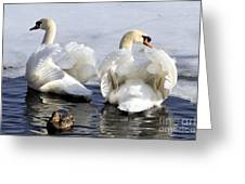 Swans And Duck Greeting Card