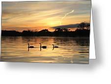 Swans At Dawn Greeting Card