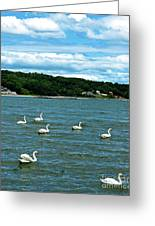 Swans At Tappan Beach Greeting Card