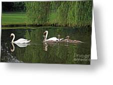 Swans At Two Months Greeting Card