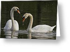 Swans Courtship Greeting Card