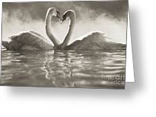 Swans In Lake Greeting Card