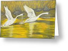 Swans In The Fall In Montana Greeting Card