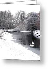 Swans In The Snow Greeting Card