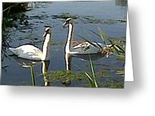 Swans In The Sunshine Greeting Card