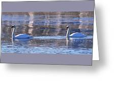 Swans In Winter Greeting Card