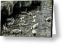 Swans On The Canal Greeting Card