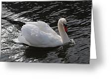 Swans Reflection Greeting Card
