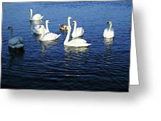 Swans Sligo Ireland Greeting Card