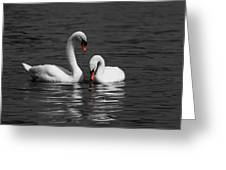 Swans Swimming Isolation Greeting Card