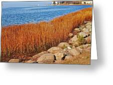 Swath Of Gold In Centerport, New York Greeting Card