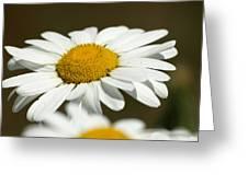 Sweat Bee Greeting Card